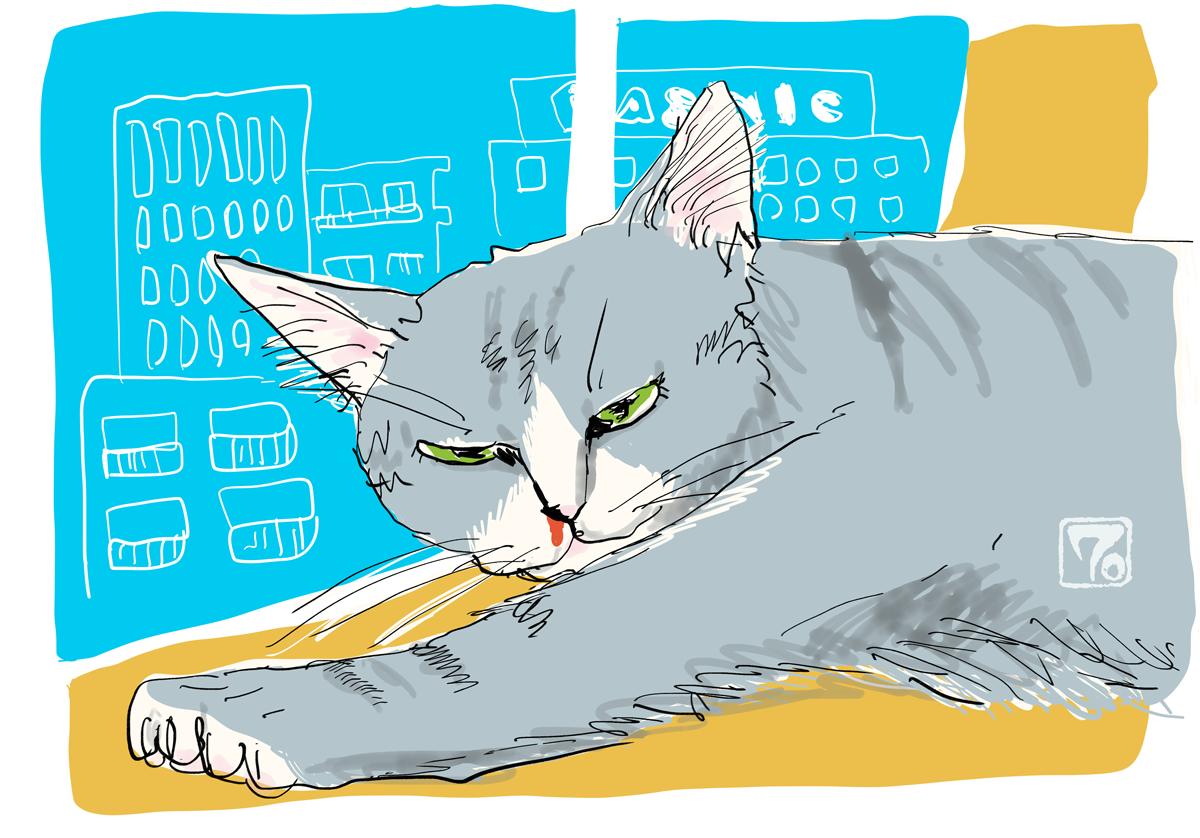 猫の鼻炎、猫の鼻血